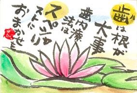 道庁の蓮の花
