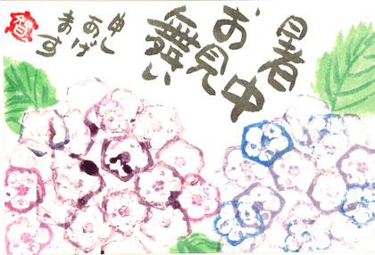 オクラ紫陽花