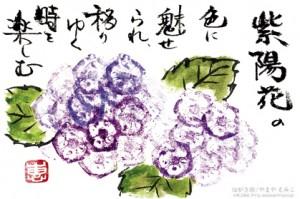 紫陽花のはがき絵