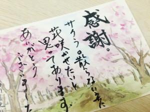 桜のはがき絵