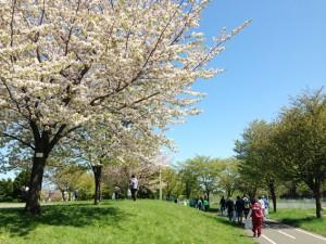 桜も咲いていましたよ