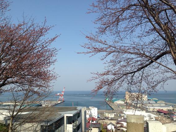 桜には1日早かったけど、ガントリークレーンも見えます!