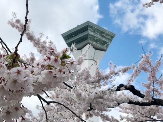 五稜郭タワーの頭と桜