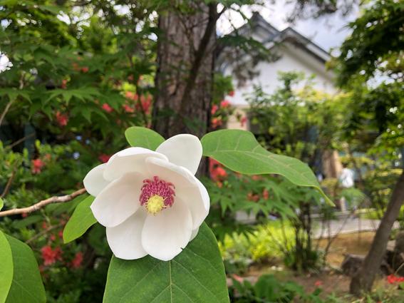 めずらしい花