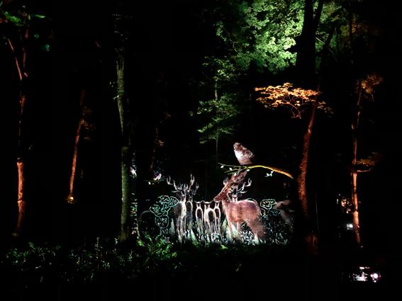 森の中のプロジェクションマッピング
