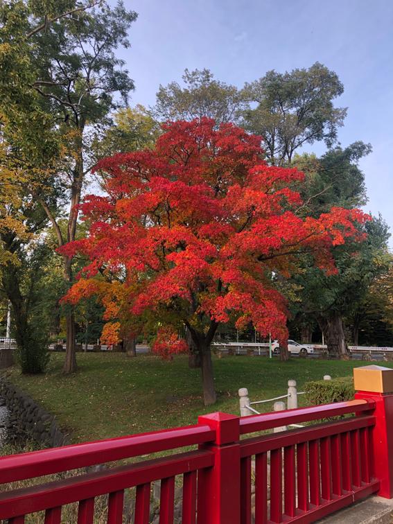 紅葉がとってもきれい!