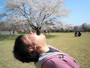函館桜70