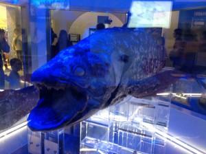 沼津深海水族館22