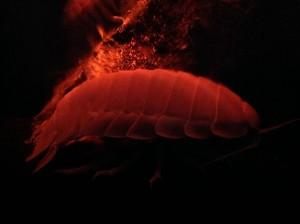 沼津深海水族館49