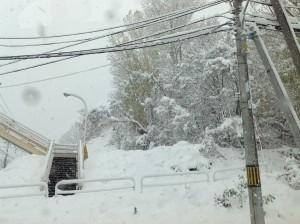 雪が積もる16